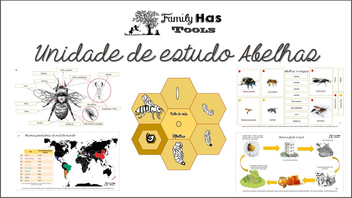 capa Unidade de estudo abelhas